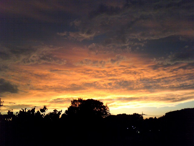 夕陽中-02.jpg